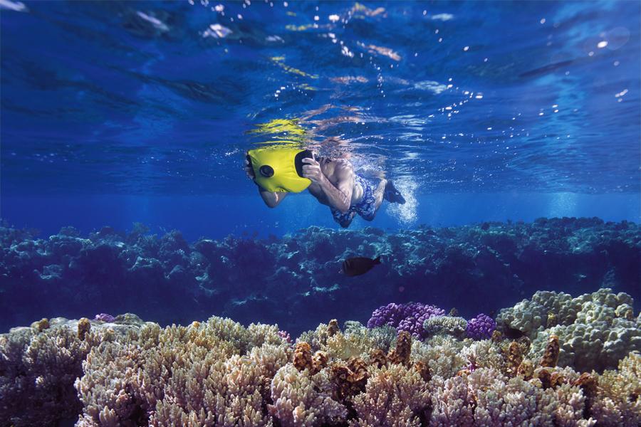 Dolphyn_snorkeling