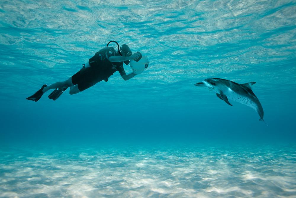dolphyn_dolphin